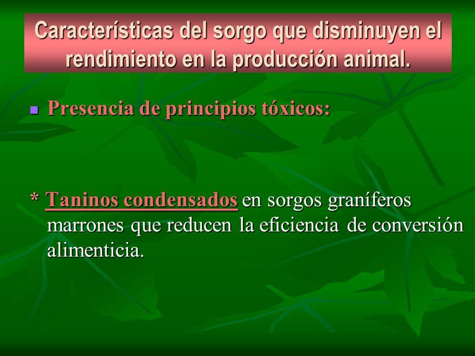 Características del sorgo que disminuyen el rendimiento en la producción animal.