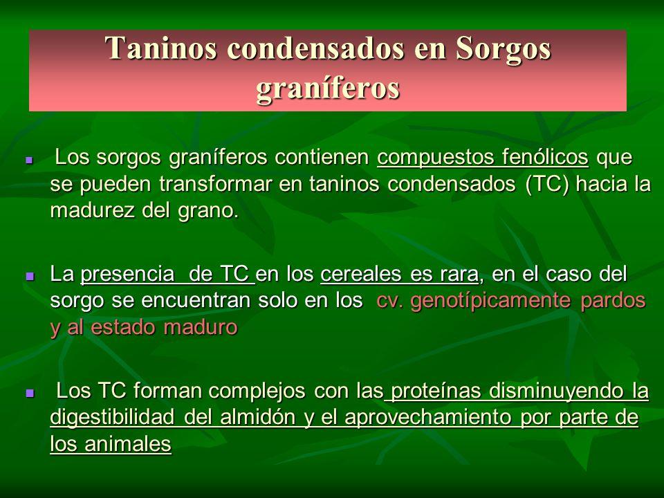 Taninos condensados en Sorgos graníferos