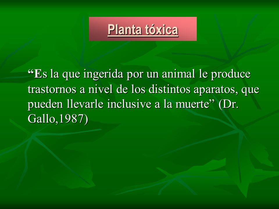 Planta tóxica