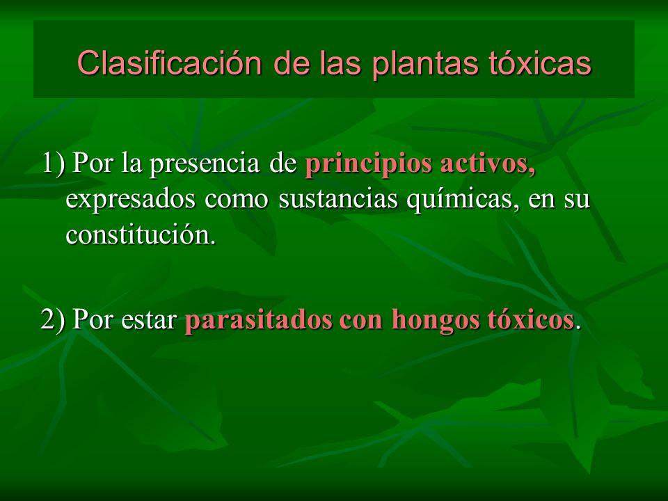 Clasificación de las plantas tóxicas