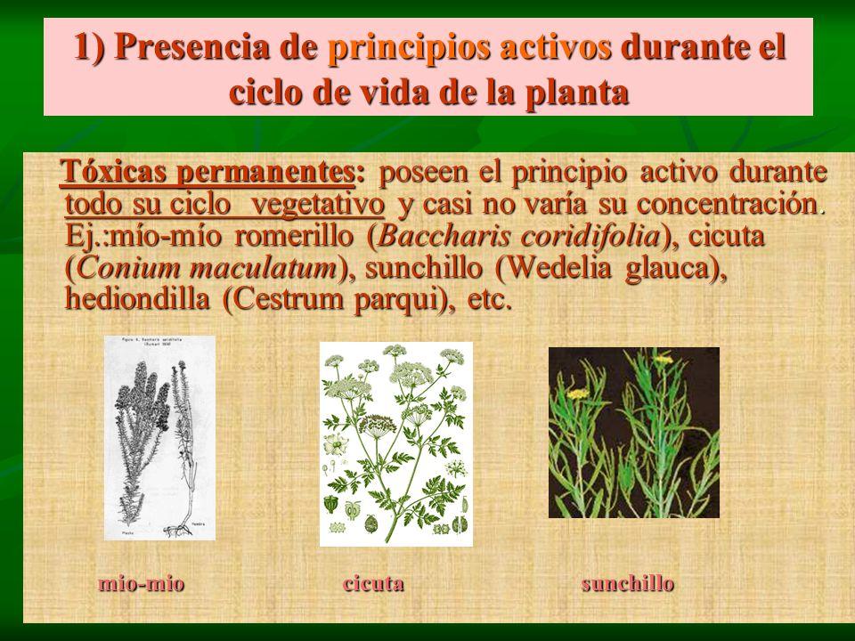 1) Presencia de principios activos durante el ciclo de vida de la planta
