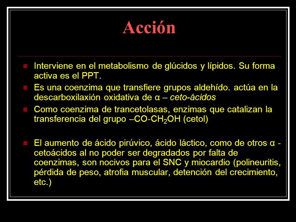 Acción Interviene en el metabolismo de glúcidos y lípidos. Su forma activa es el PPT.