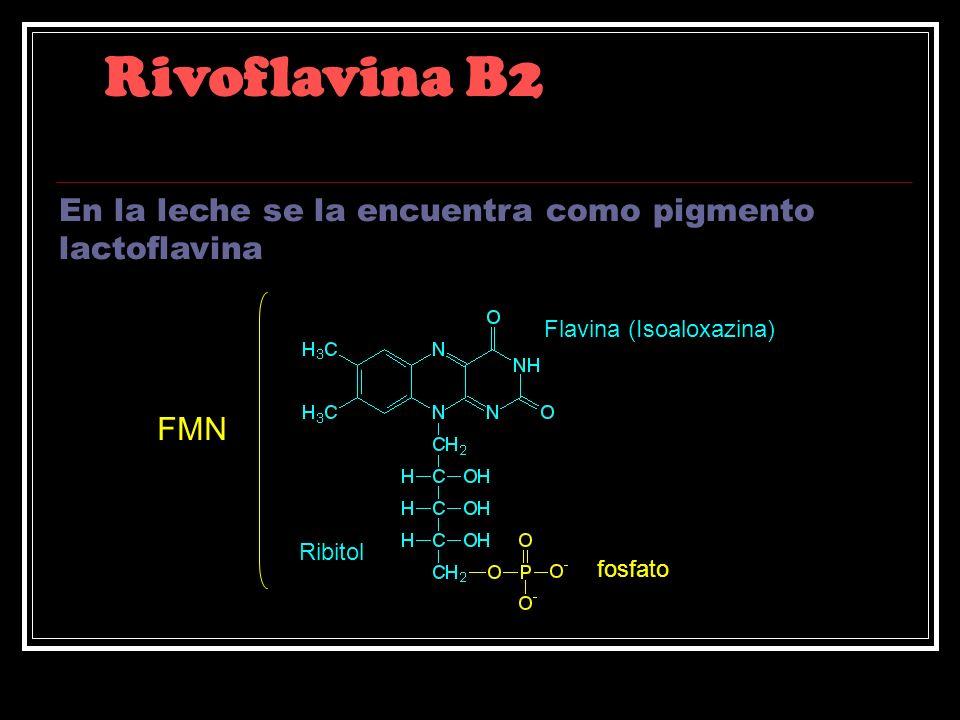 Rivoflavina B2 En la leche se la encuentra como pigmento lactoflavina