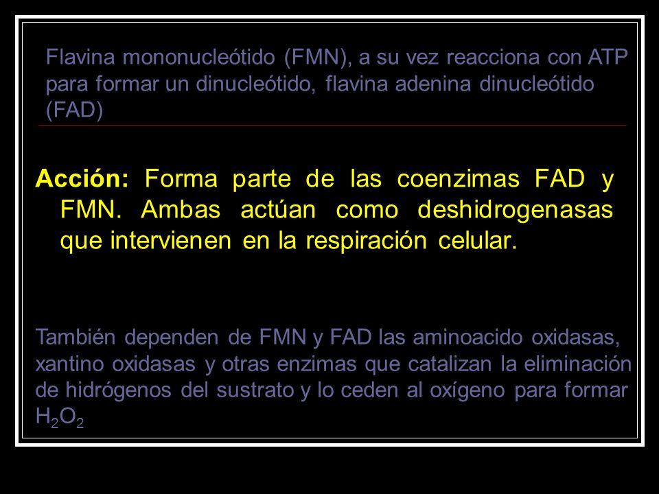 Flavina mononucleótido (FMN), a su vez reacciona con ATP para formar un dinucleótido, flavina adenina dinucleótido (FAD)
