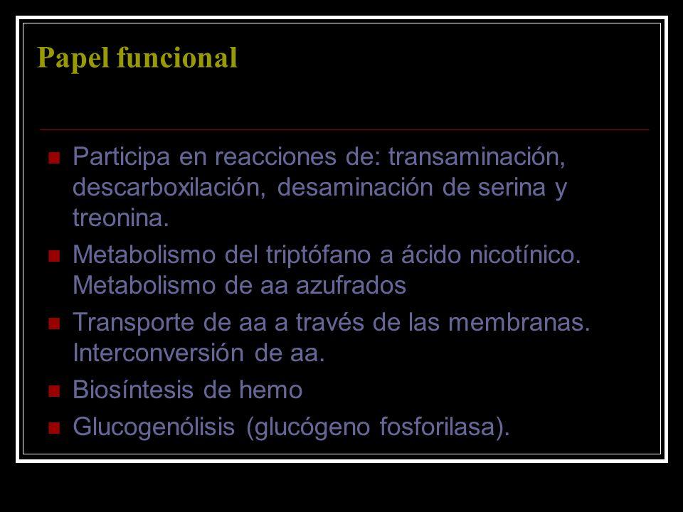 Papel funcionalParticipa en reacciones de: transaminación, descarboxilación, desaminación de serina y treonina.