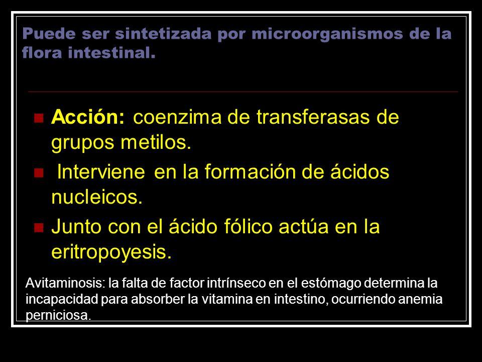 Acción: coenzima de transferasas de grupos metilos.