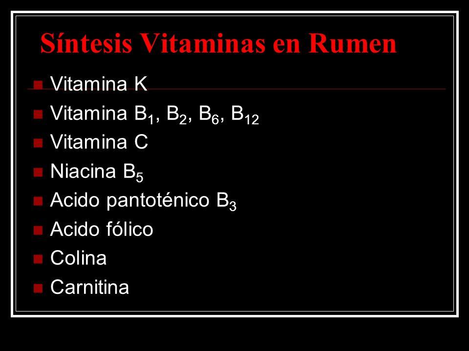 Síntesis Vitaminas en Rumen