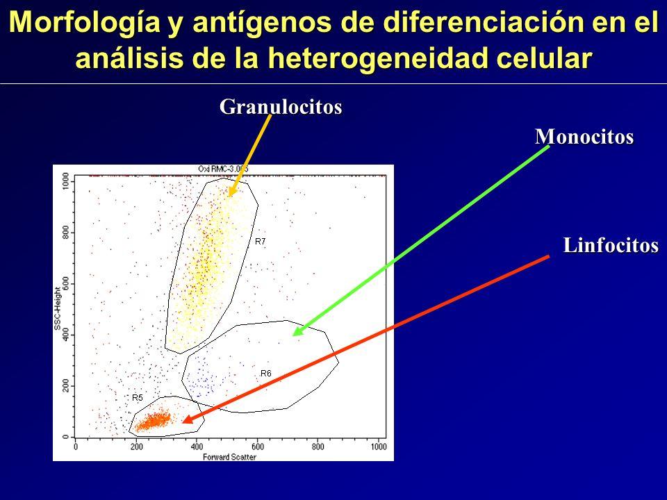 Morfología y antígenos de diferenciación en el análisis de la heterogeneidad celular