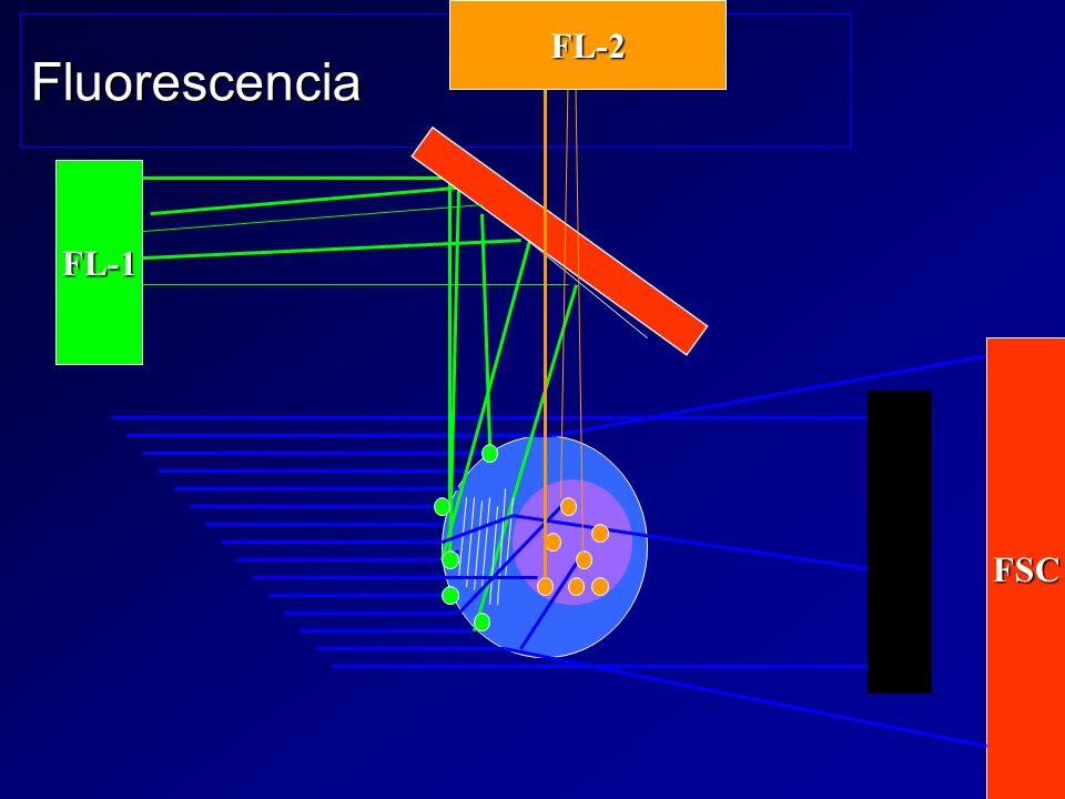 FL-2 Fluorescencia FL-1 FSC