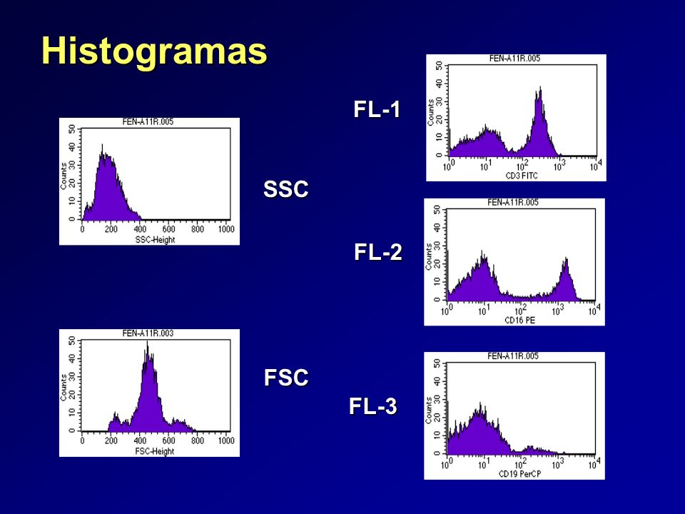 Histogramas FL-1 SSC FL-2 FSC FL-3 13