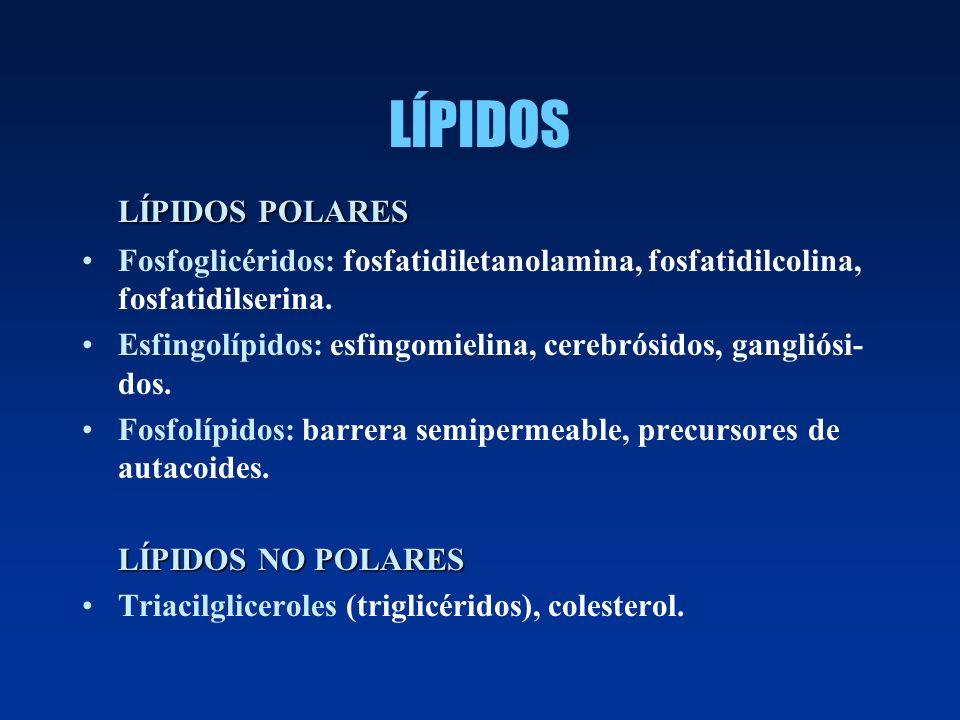 LÍPIDOS LÍPIDOS POLARES