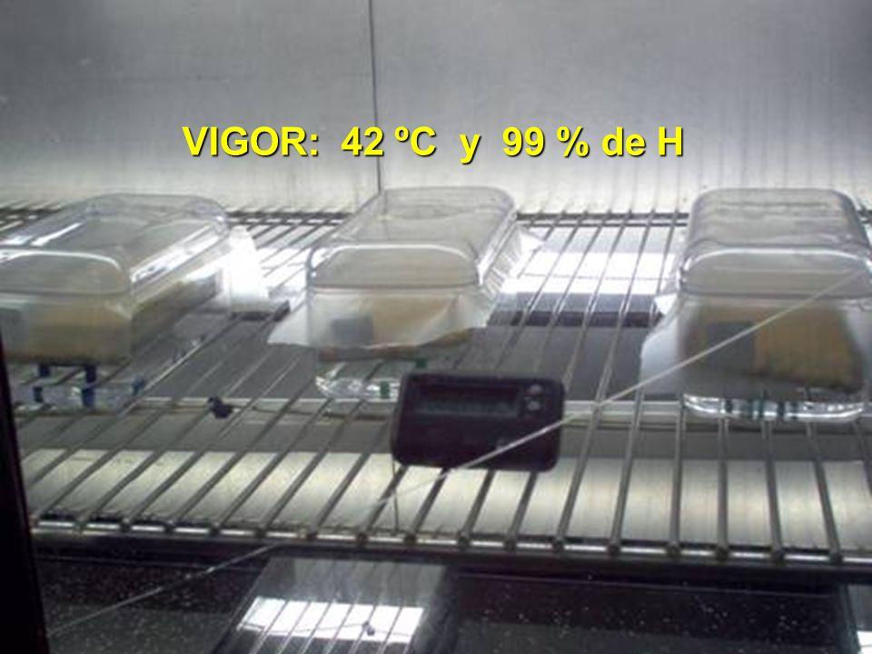 VIGOR: 42 ºC y 99 % de H