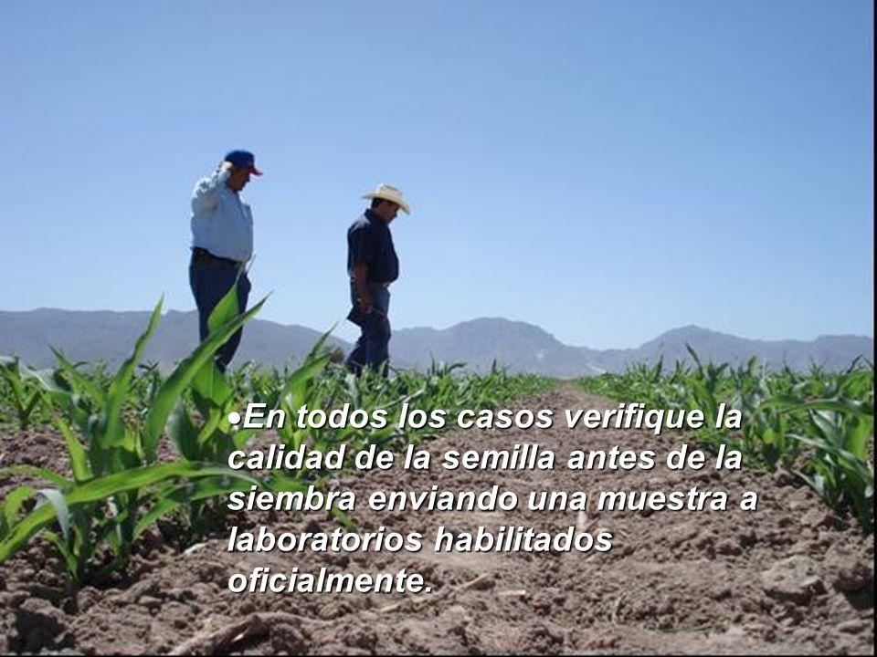 En todos los casos verifique la calidad de la semilla antes de la siembra enviando una muestra a laboratorios habilitados oficialmente.