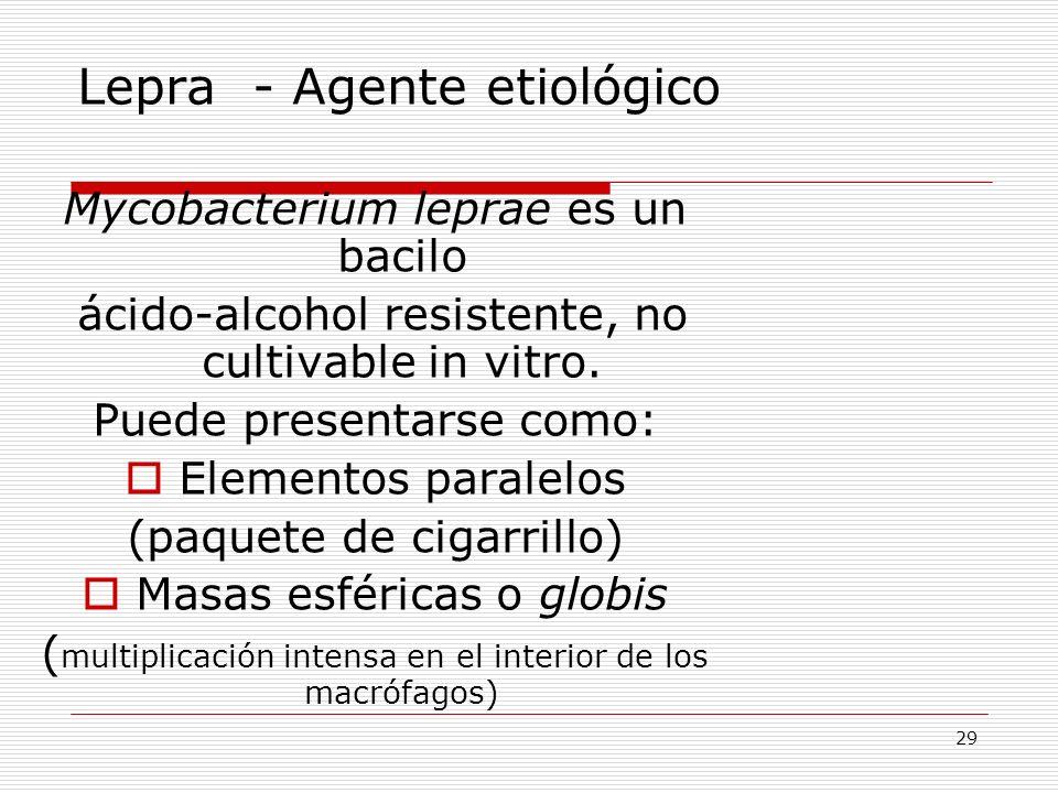 Lepra - Agente etiológico