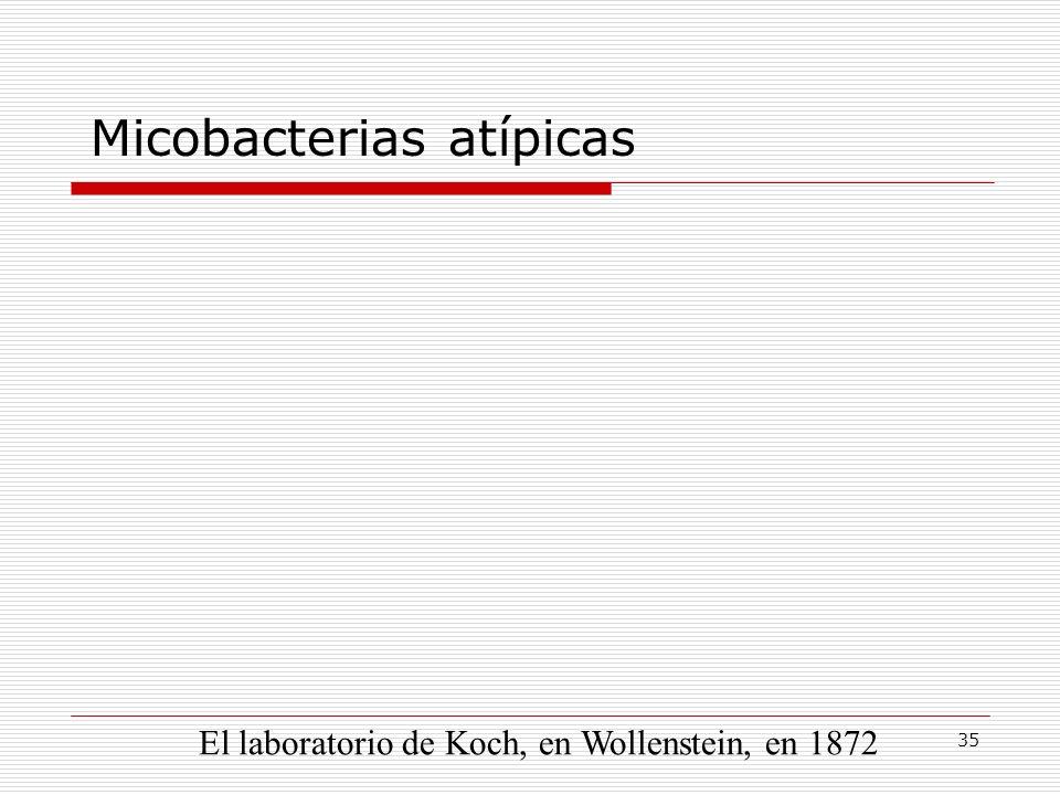 Micobacterias atípicas