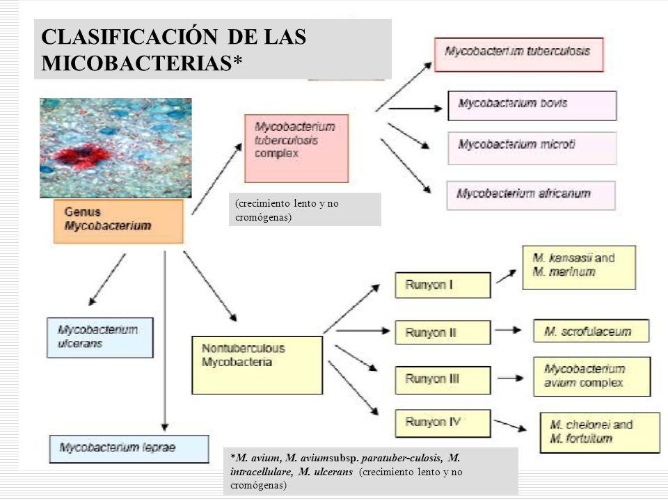 CLASIFICACIÓN DE LAS MICOBACTERIAS*