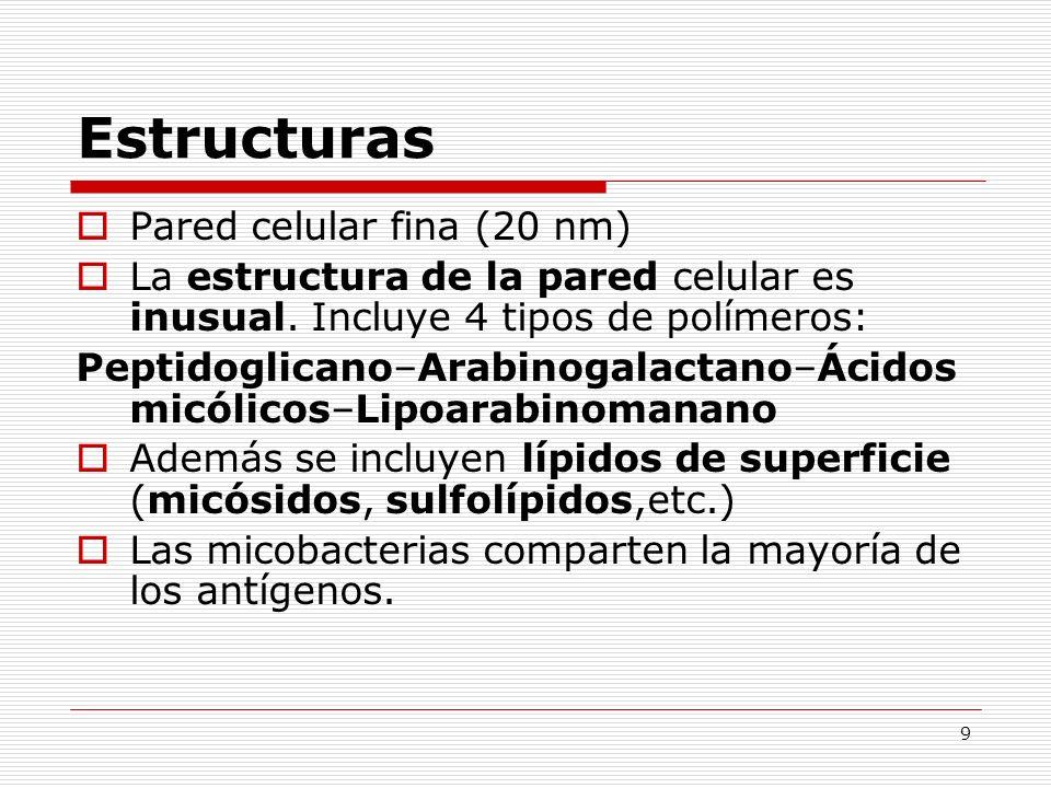 Estructuras Pared celular fina (20 nm)