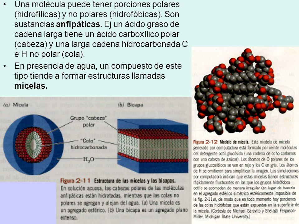 Una molécula puede tener porciones polares (hidrofílicas) y no polares (hidrofóbicas). Son sustancias anfipáticas. Ej un ácido graso de cadena larga tiene un ácido carboxílico polar (cabeza) y una larga cadena hidrocarbonada C e H no polar (cola).