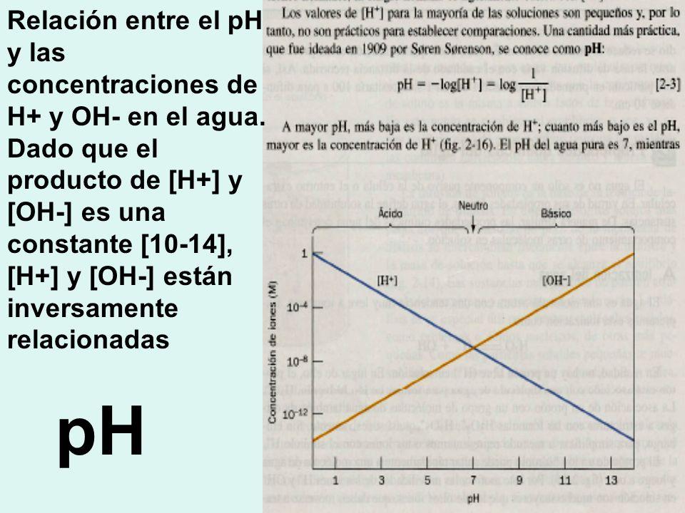 Relación entre el pH y las concentraciones de H+ y OH- en el agua