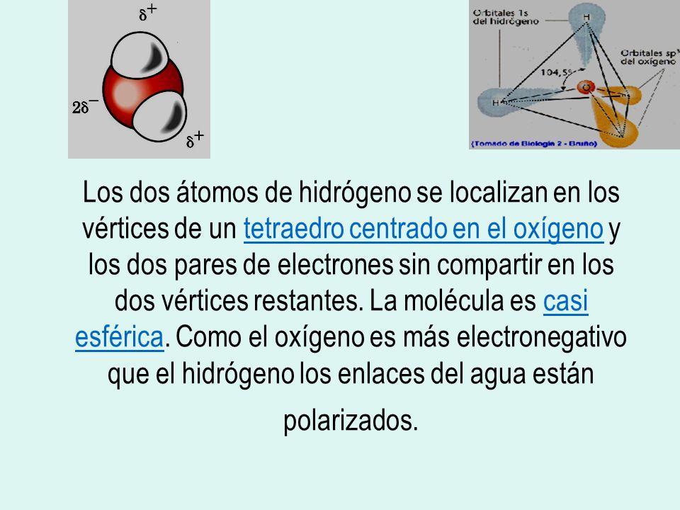 Los dos átomos de hidrógeno se localizan en los vértices de un tetraedro centrado en el oxígeno y los dos pares de electrones sin compartir en los dos vértices restantes.