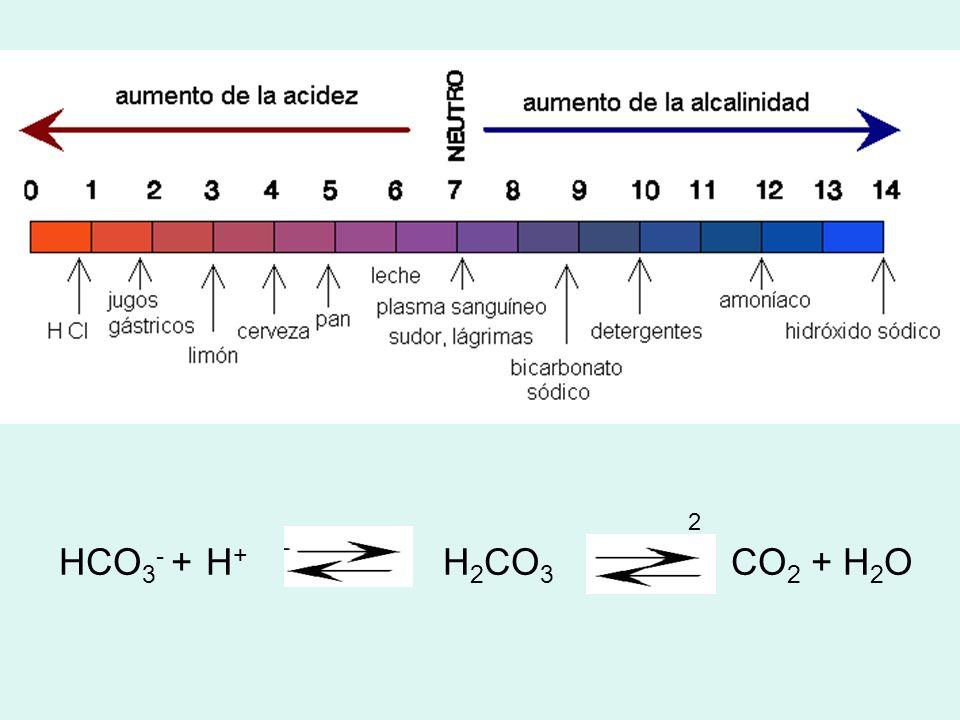 2 HCO3- + H+ H2CO3 CO2 + H2O