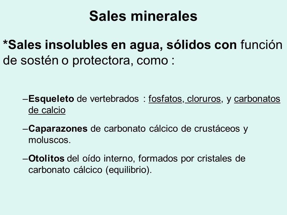 Sales minerales*Sales insolubles en agua, sólidos con función de sostén o protectora, como :