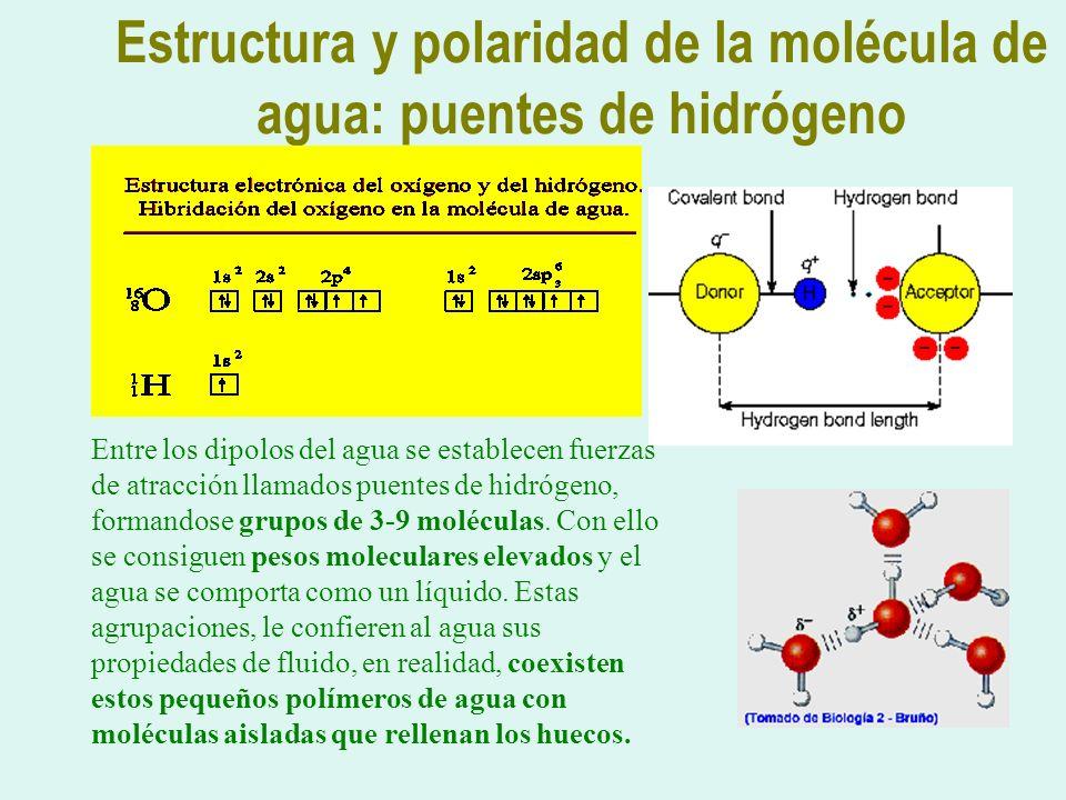 Estructura y polaridad de la molécula de agua: puentes de hidrógeno