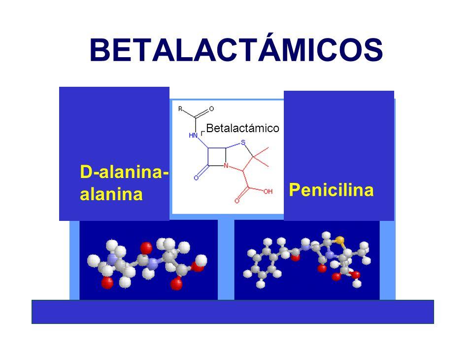 BETALACTÁMICOS Betalactámico D-alanina-alanina Penicilina
