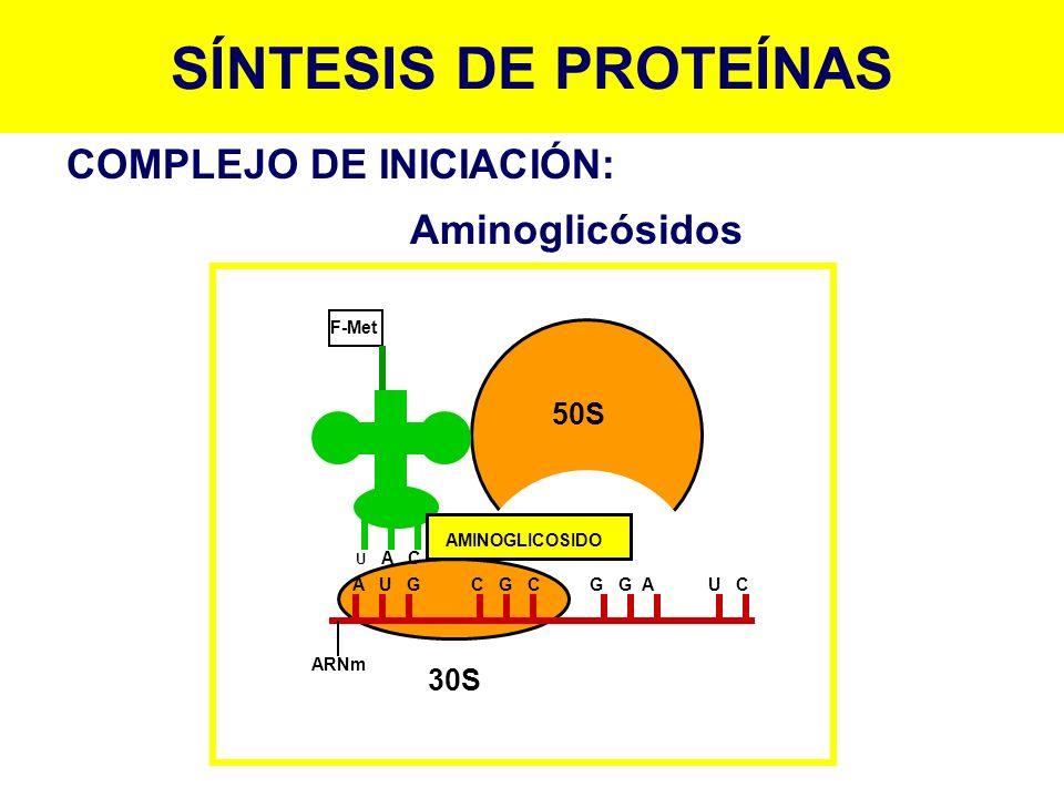 SÍNTESIS DE PROTEÍNAS COMPLEJO DE INICIACIÓN: Aminoglicósidos 50S 30S