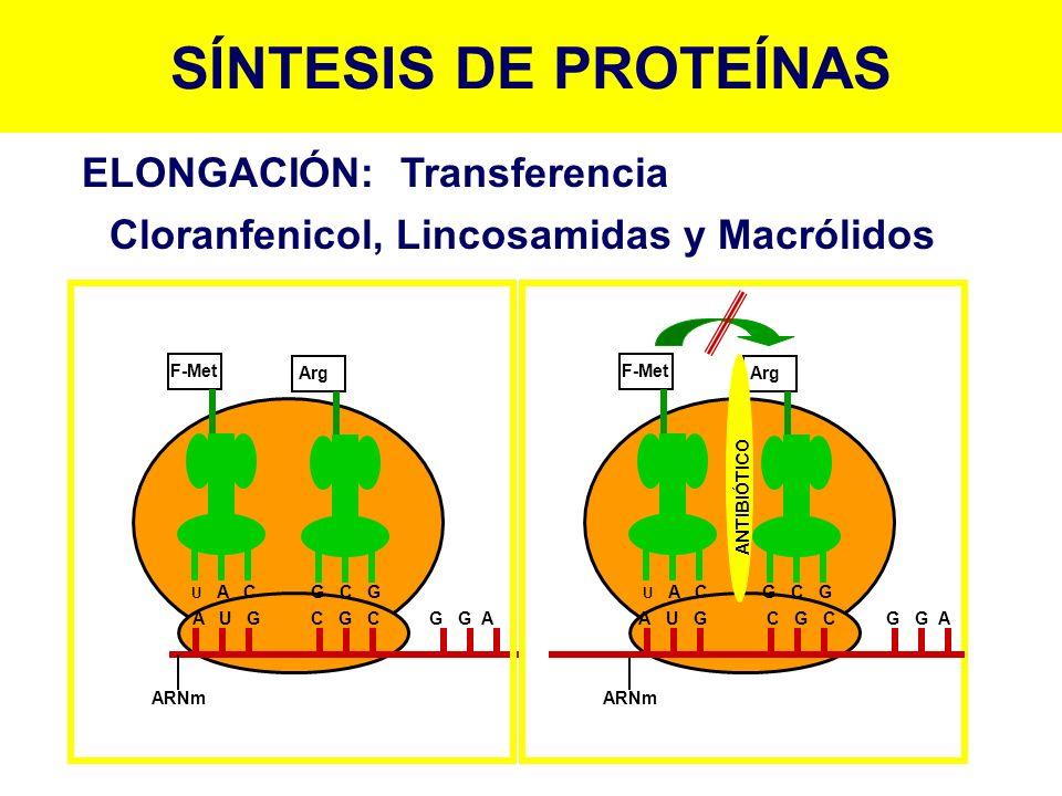 Cloranfenicol, Lincosamidas y Macrólidos