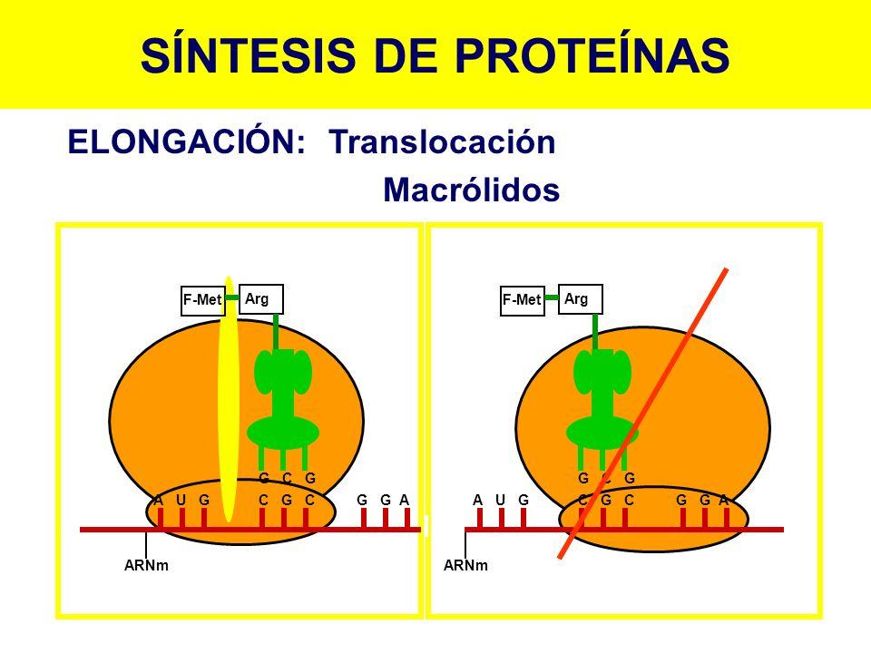 SÍNTESIS DE PROTEÍNAS ELONGACIÓN: Translocación Macrólidos F-Met Arg