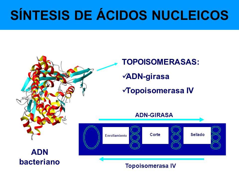 SÍNTESIS DE ÁCIDOS NUCLEICOS