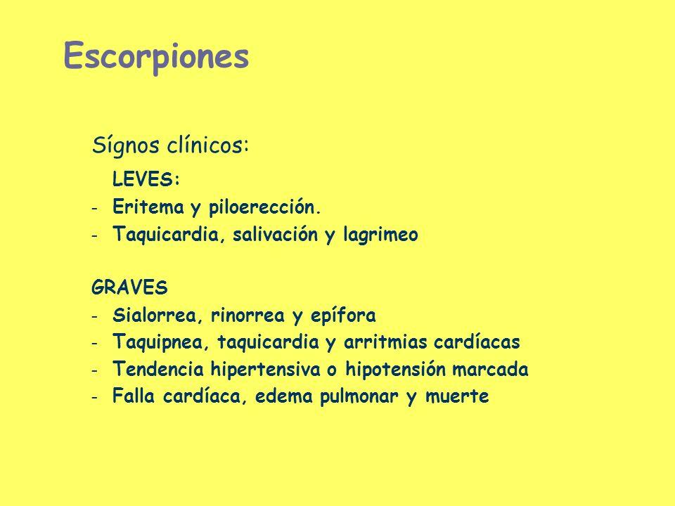 Escorpiones Sígnos clínicos: LEVES: Eritema y piloerección.
