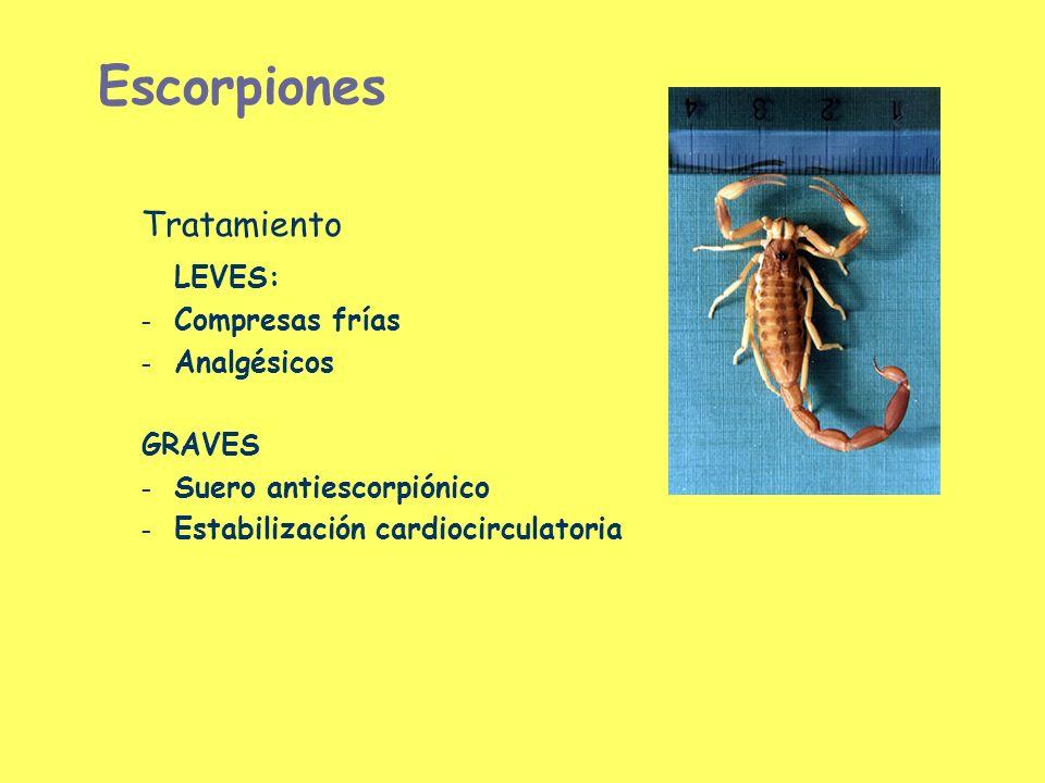 Escorpiones Tratamiento LEVES: Compresas frías Analgésicos GRAVES