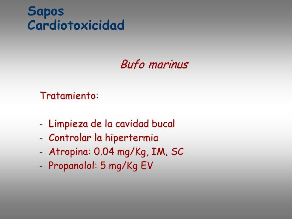 Sapos Cardiotoxicidad