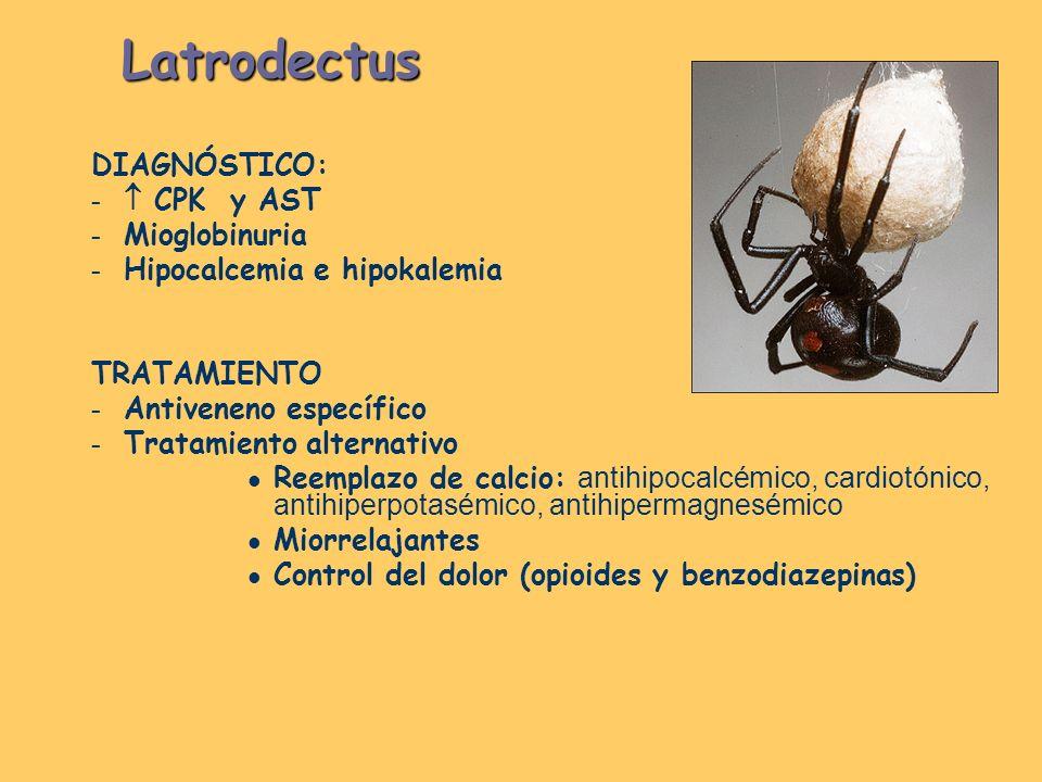 Latrodectus DIAGNÓSTICO:  CPK y AST Mioglobinuria