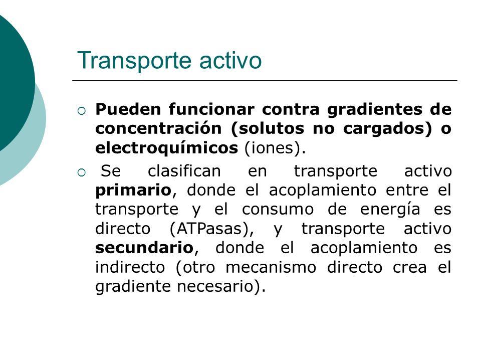 Transporte activo Pueden funcionar contra gradientes de concentración (solutos no cargados) o electroquímicos (iones).