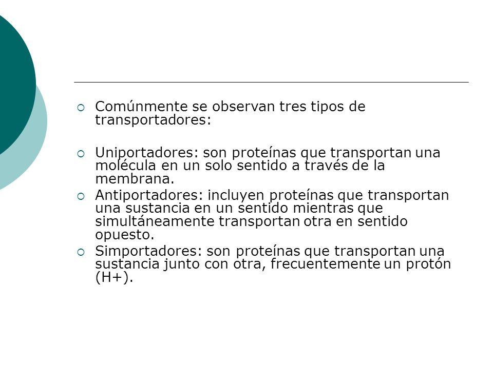 Comúnmente se observan tres tipos de transportadores: