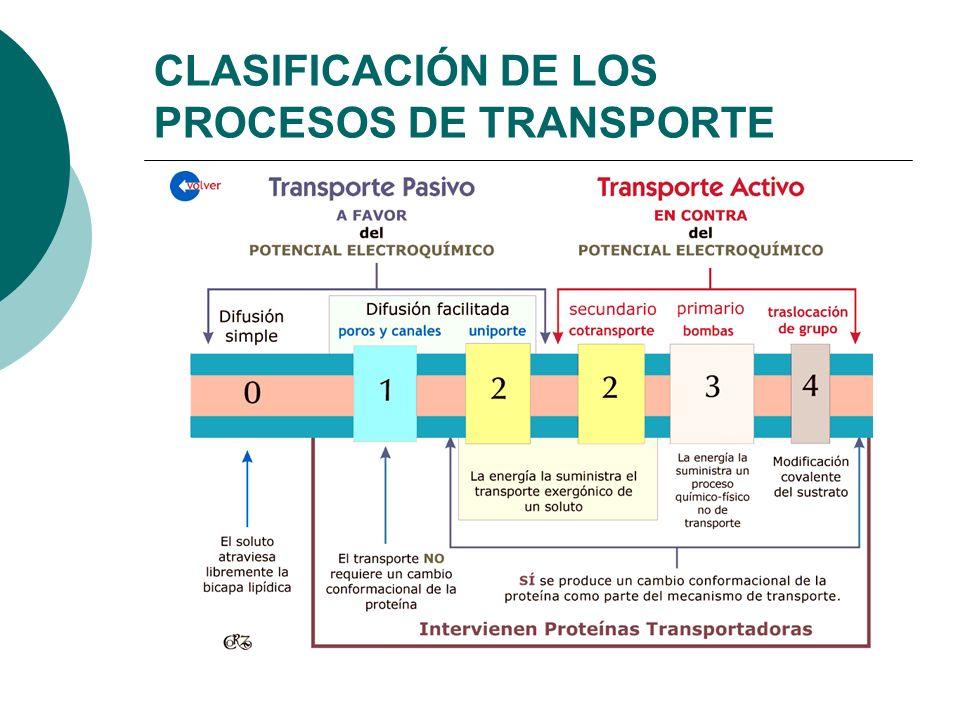 CLASIFICACIÓN DE LOS PROCESOS DE TRANSPORTE