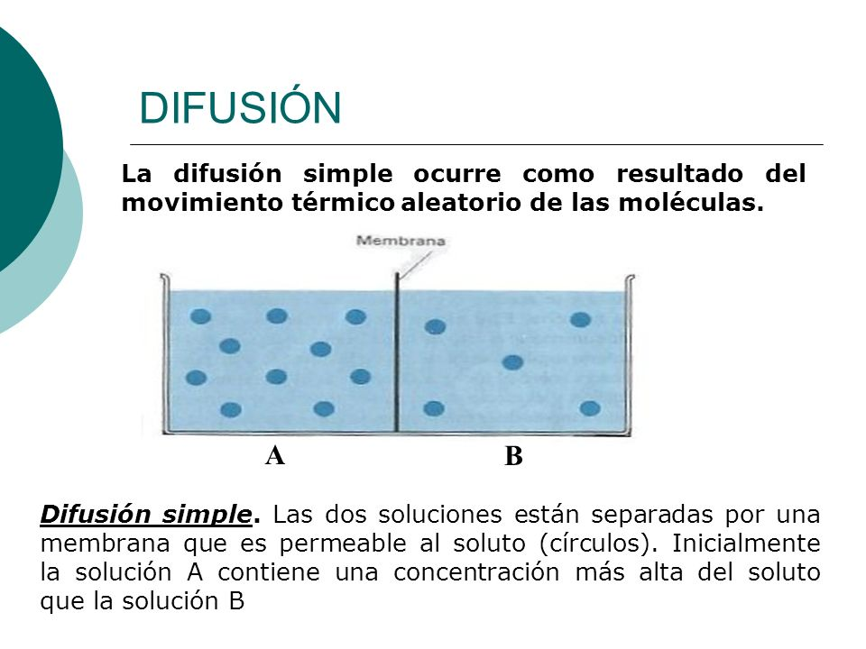 DIFUSIÓN La difusión simple ocurre como resultado del movimiento térmico aleatorio de las moléculas.
