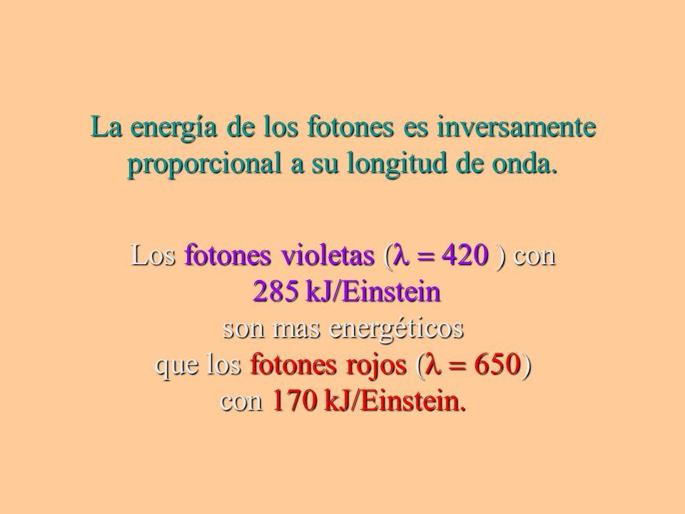 Los fotones violetas (l = 420 ) con 285 kJ/Einstein