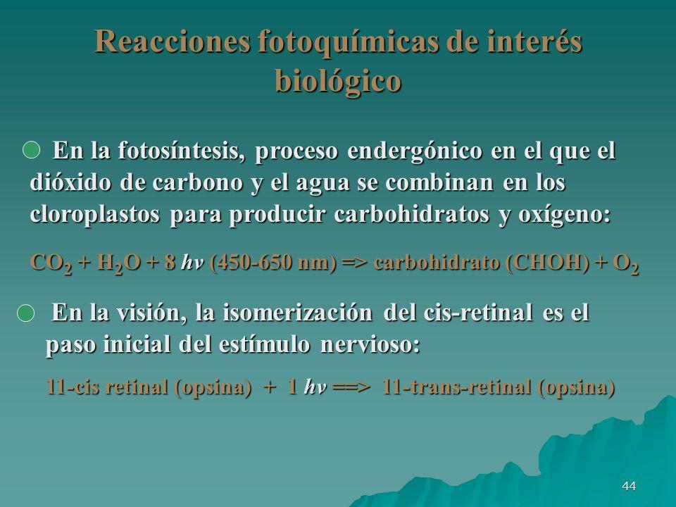 Reacciones fotoquímicas de interés biológico