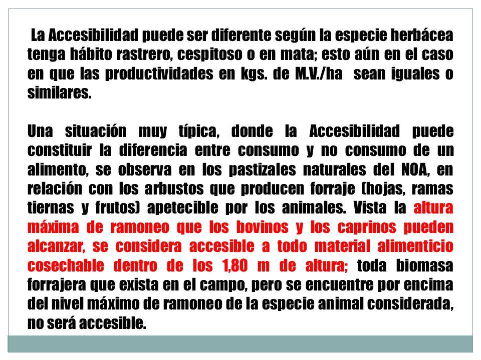 La Accesibilidad puede ser diferente según la especie herbácea tenga hábito rastrero, cespitoso o en mata; esto aún en el caso en que las productividades en kgs. de M.V./ha sean iguales o similares.