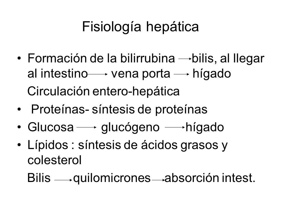 Fisiología hepática Formación de la bilirrubina bilis, al llegar al intestino vena porta hígado.
