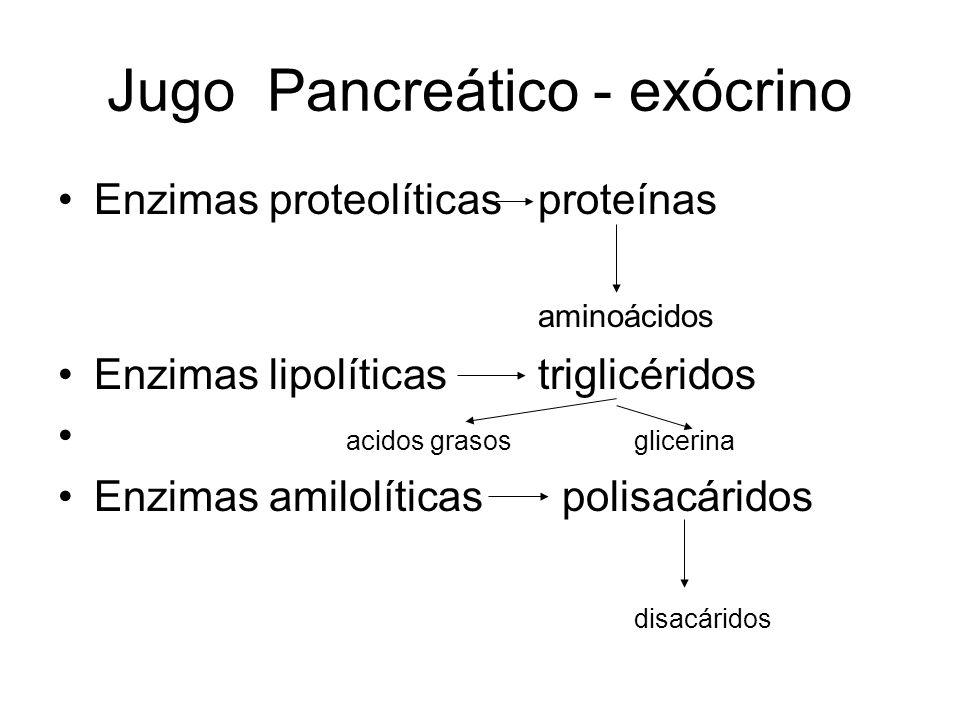 Jugo Pancreático - exócrino