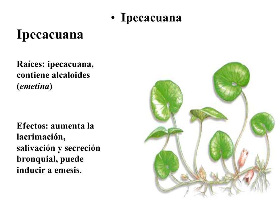 Ipecacuana Ipecacuana