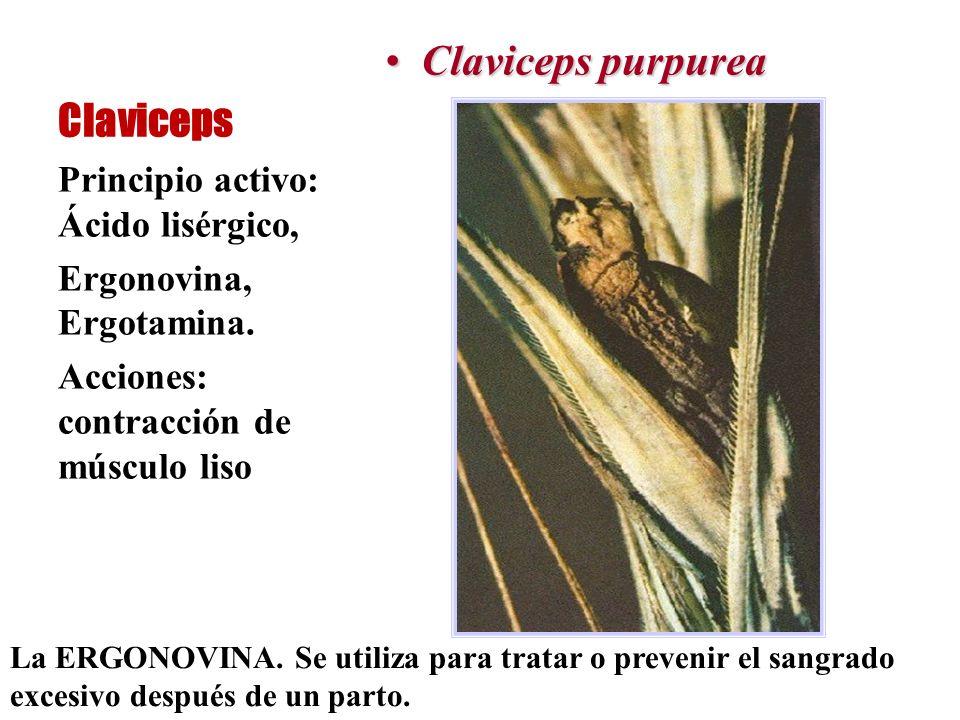 Claviceps purpurea Claviceps Principio activo: Ácido lisérgico,