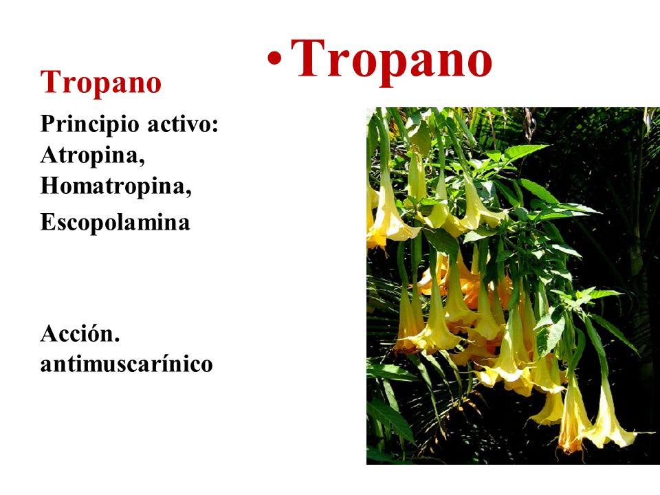 Tropano Tropano Principio activo: Atropina, Homatropina, Escopolamina
