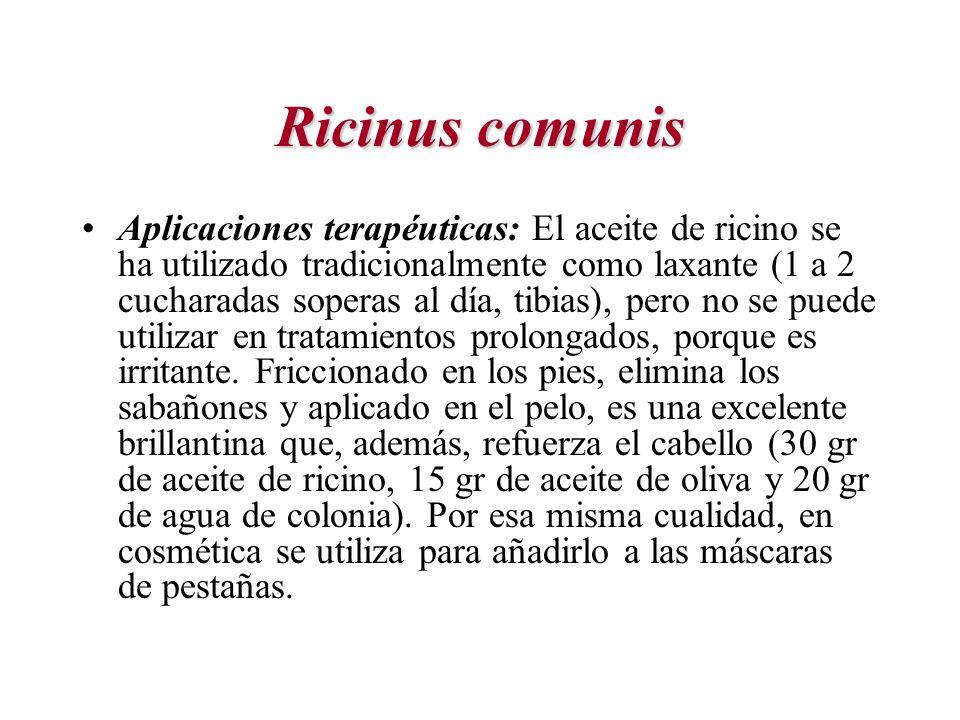 Ricinus comunis
