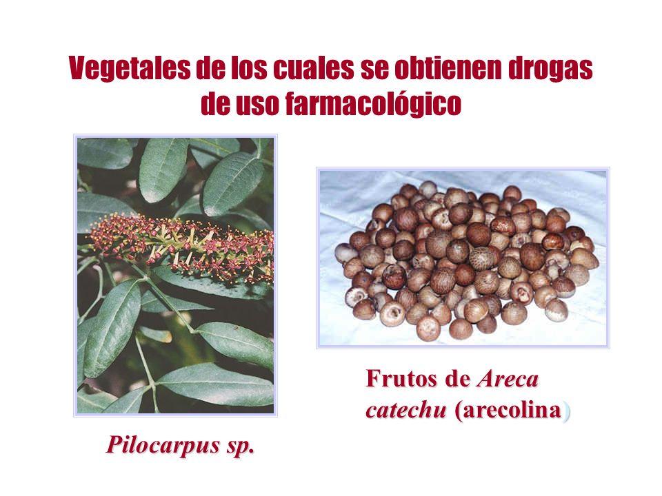 Vegetales de los cuales se obtienen drogas de uso farmacológico